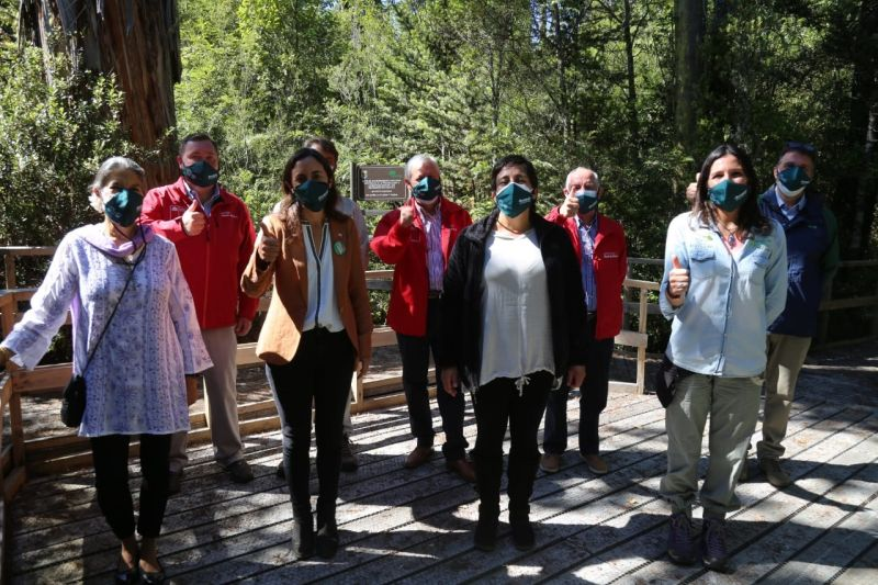 Proyecto + Bosques
