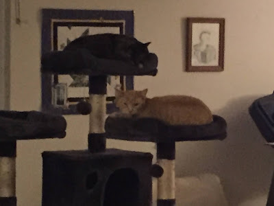 Grainy photo of two cats on a cat tree