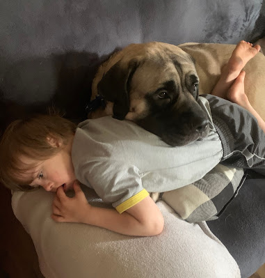 Best dog breeds for kids with special needs