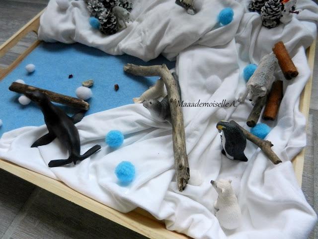 || Plateau sensoriel : Sur la banquise avec les animaux polaires