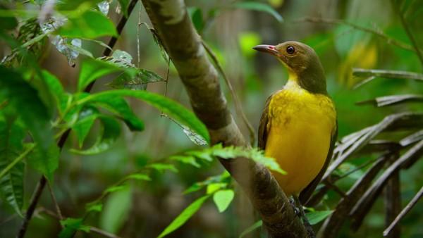 Bailando con los pájaros (2019) HD 1080p y 720p Latino Dual