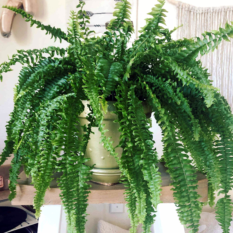 9 Houseplants Safe for Cats