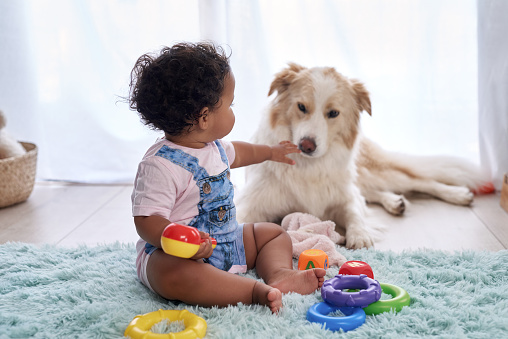 Children and Pets – Teaching Them to Co-Exist