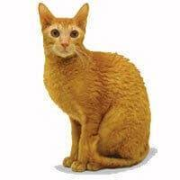 Kucing Cornish Rex dan Karakteristiknya
