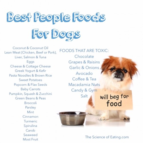 Why Grain Free Dog Food Is Bad