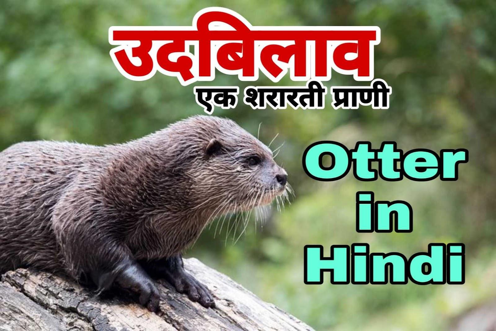 उदबिलाव एक शरारती जानवर - 15 Facts about Otter in Hindi