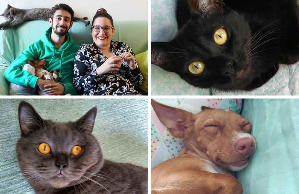vida de pet+ blogue de animais de estimação + blogue português + pedro e telma