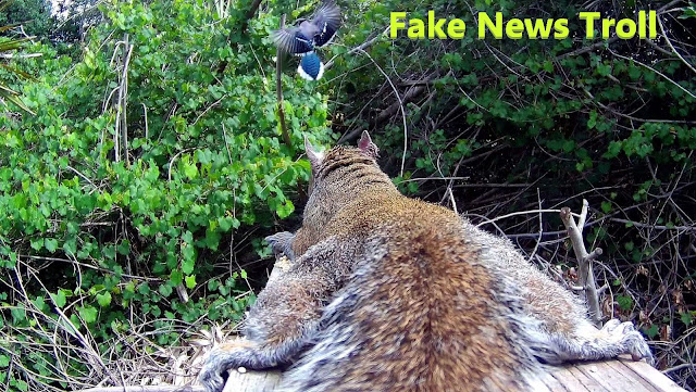 Prostrate Squirrels Defeat Blue Jays Fake News Trolling