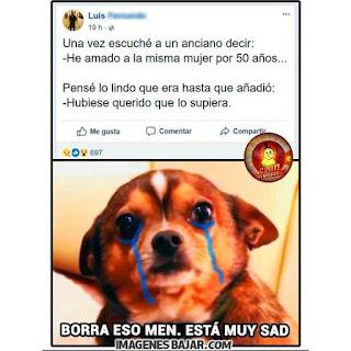 Imagenes Graciosas Chistosas Memes de perros sad