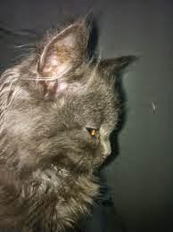 الاسهال عند القطط وطرق العلاج والوقايه منه