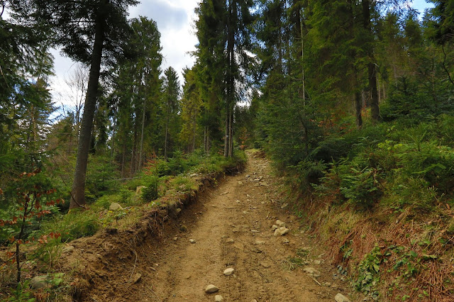 Zielony szlak Obidowa - Bukowina Obidowska