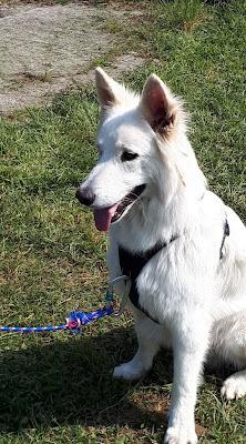 educateur canin, agility, haute-savoie 74