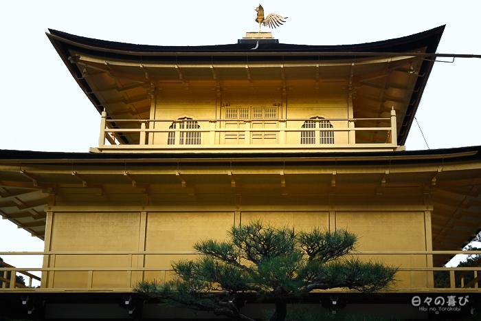 Pavillon d'or vu de dos, Kinkaku-ji, Kyoto