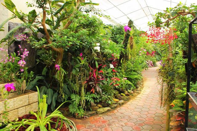 山口県、宇部市のときわ公園の植物園がリニューアルしたよ【Y】 プラントハンター西畠清順、世界を旅する植物館  特別展示室 蘭