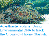 https://sciencythoughts.blogspot.com/2019/01/acanthaster-solaris-using-environmental.html
