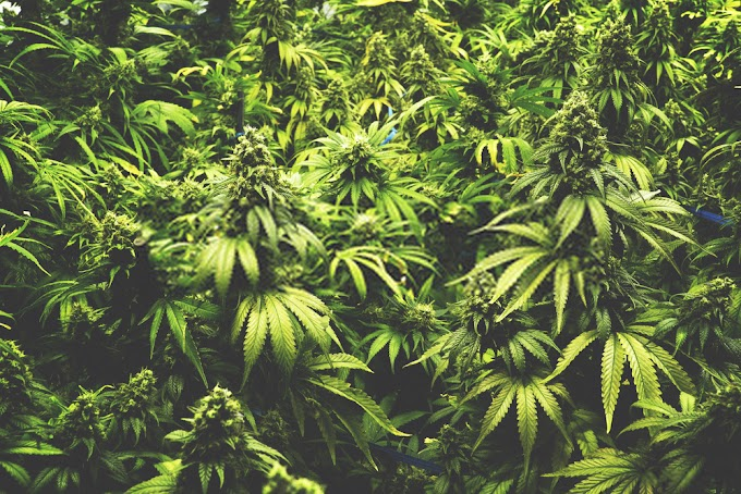 Top 10 Websites Accepting Guest Posts For Submit Guest Post Marijuana Niche