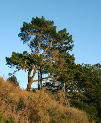 reforestaciones en españa