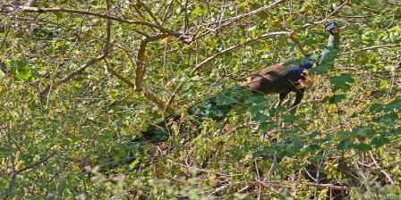 taman nasional baluran melindungi hewan apa taman nasional baluran terletak di