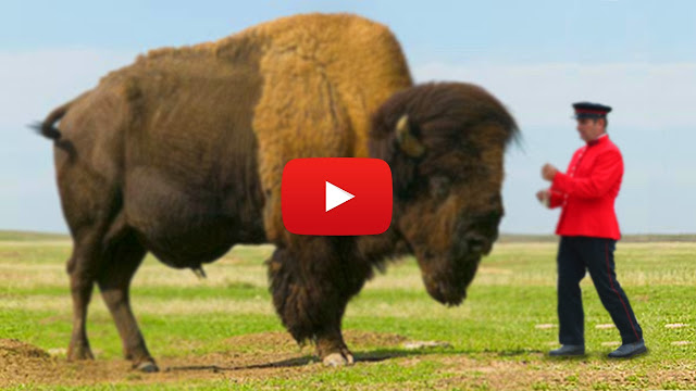 Top 10 Biggest Animals!