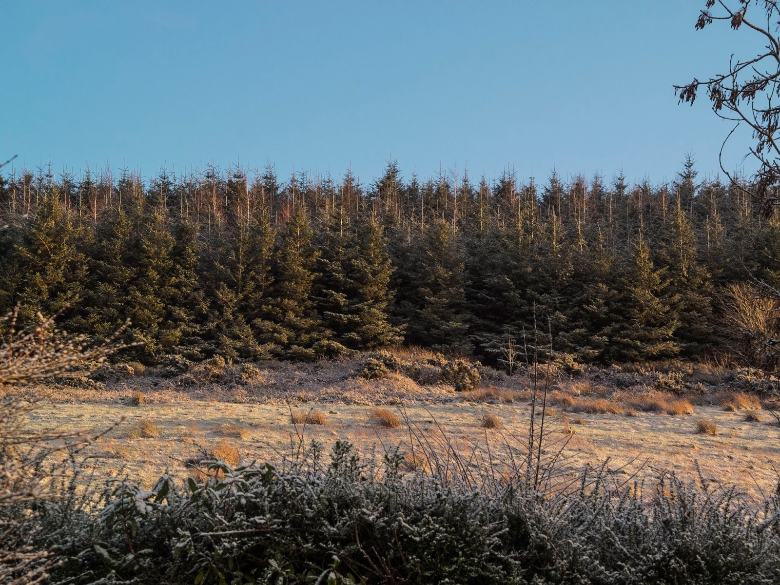 Snow covered forestry on top of a mountain at sunset in North Cork.