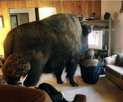 Mit Haustier Fernsehen schauen - Coole Bilder Geschichte