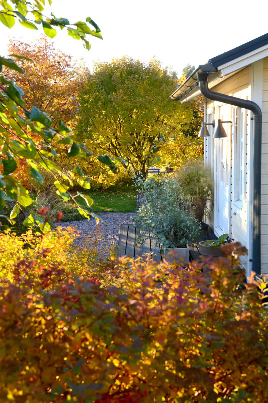 syksyn värit puutarhassa