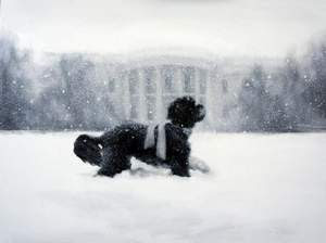 Bo playing in the snow in front of the White House