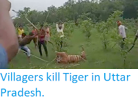 http://sciencythoughts.blogspot.com/2019/07/villagers-kill-tiger-in-uttar-pradesh.html