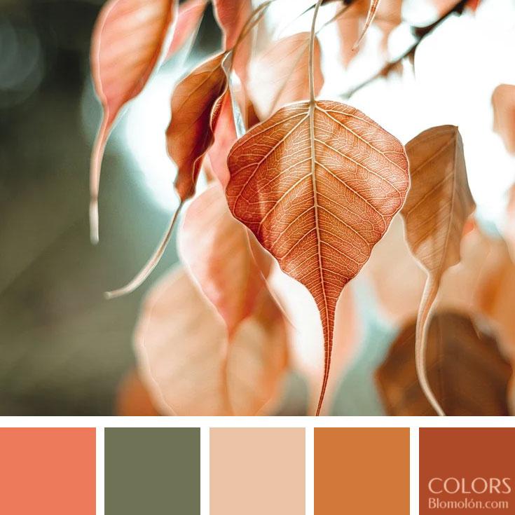 variedad_en_color_paletas_de_colores_99