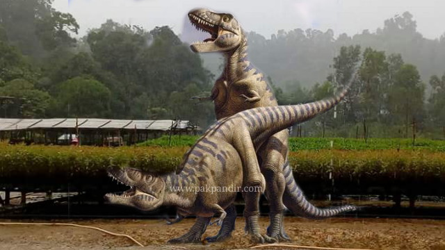 Penemuan Fosil Dinosaurus Di Indonesia