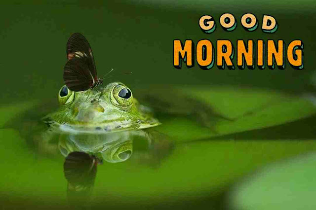 Awesome  good morning image with cute frog