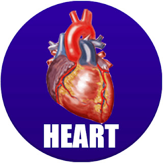heart in spanish