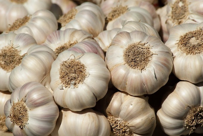Benefits of garlic in health and life