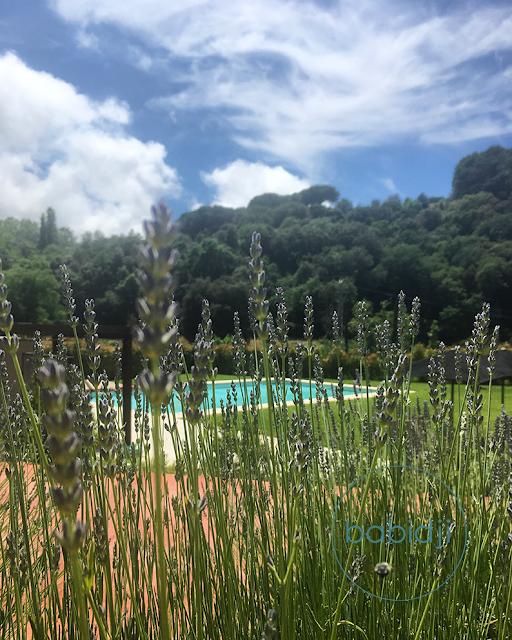 lavande en premier plan et piscine du Mas Salagros en arrière plan