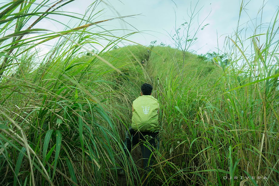 Trekking through the trail fringed by tall grass