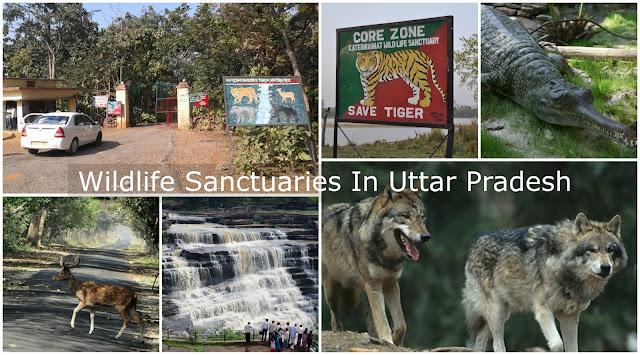 Wildlife Sanctuaries in Uttar Pradesh