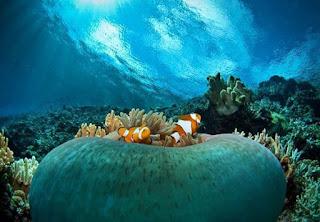 Pulau Waleabahi