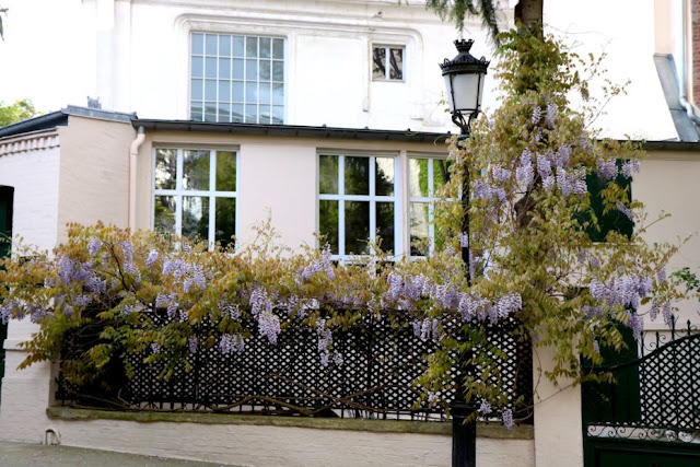 House 4 with blooming lavender blue wisteria on private Avenue Frochot in Paris