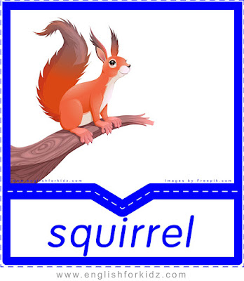 English flashcard, animals vocabulary, squirrel