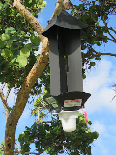 Coconut rhinoceros beetle trap, Ala Moana Regional Park - Waikiki, HI