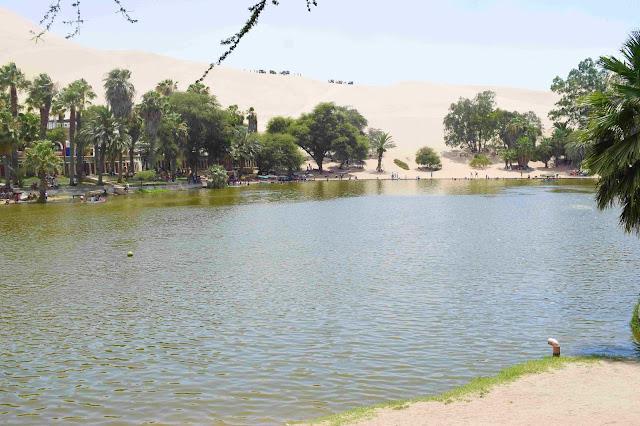 lagoa esverdeada no oasis
