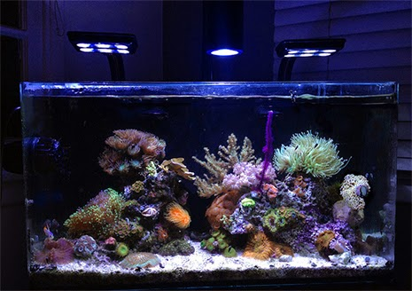 11 Inspirational Innovative Marine Nuvo Aquariums Marine
