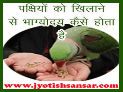 जानिए पक्षी ज्योतिष के बारे में, कैसे दूर करे दुर्भाग्य को चिडियों को खाना खिला के.