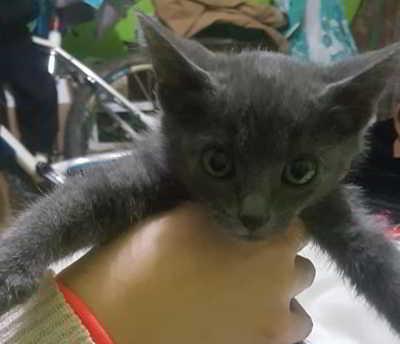 gatitos 2