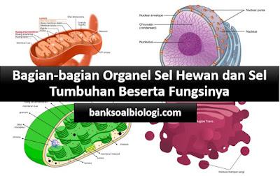 7500 Gambar Organ Hewan Dan Tumbuhan Beserta Fungsinya HD