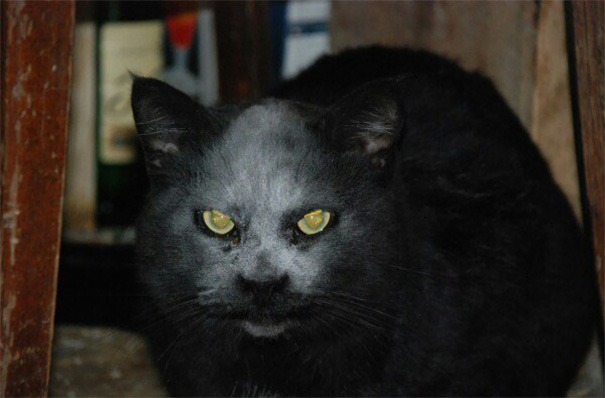 Kisii in Terror as Demons Possess Cats