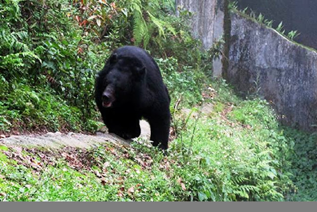 Darjeeling zoo begins live streaming of animals
