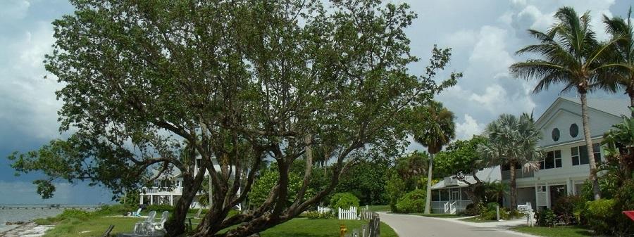 Comienzo de la ruta al norte de Pine Island