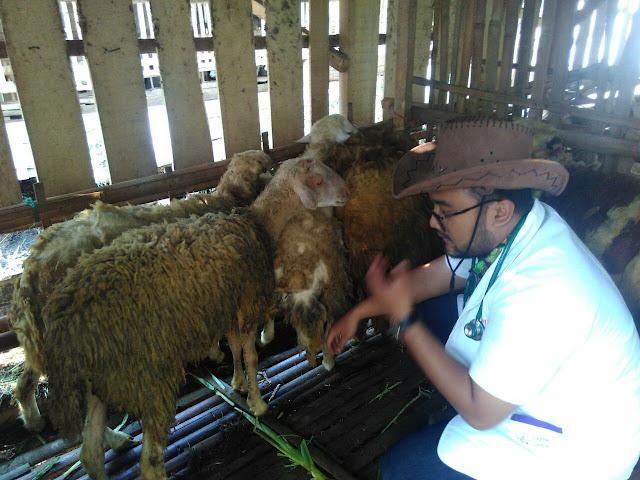 Pemeriksaan antemortem domba Qurban di PRM Pakusari