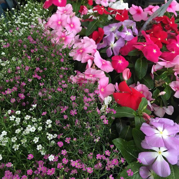 梅雨のお庭を彩るお花入荷しました☆